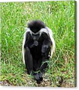 Meditating Monkey Canvas Print