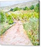 Medjugorje Path To Apparition Hill Canvas Print