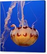 Medusa Jellyfish  Canvas Print