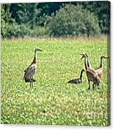 Meeting Of The Cranes Canvas Print