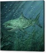 Megadolon Shark Canvas Print