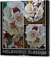 Melbourne Blossom Canvas Print