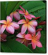 Melia Hae Hawaii Pink Tropical Plumeria Keanae Canvas Print