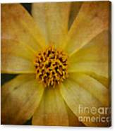 Mellow Yellow  2 Canvas Print