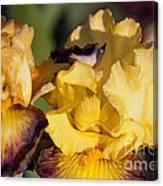 Mellow Yellow Canvas Print