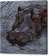 Menacing Hippo Canvas Print