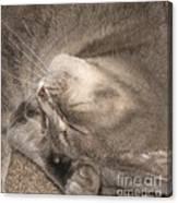 Meowww I Have A Headache Canvas Print