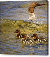 Merganser Lake Tahoe Canvas Print