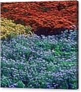 Merging Colors Canvas Print