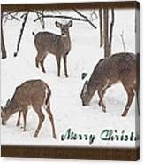 Merry Christmas Card - Whitetail Deer In Snow Canvas Print