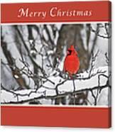 Merry Christmas Male Cardinal Canvas Print