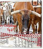 Longhorns Merry Christmas Ya'll Canvas Print