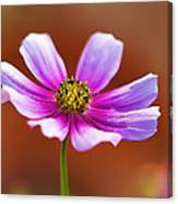 Merry Cosmos Floral Canvas Print