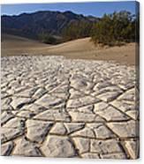 Mesquite Dune Mosaic Canvas Print