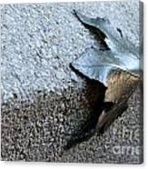 Metal Leaf Canvas Print