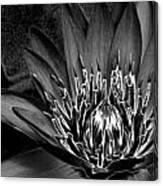 Metal Lotus Canvas Print