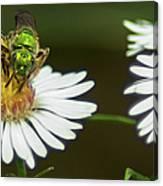 Metallic Green Wasp Canvas Print