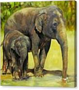Thirsty, Methai And Baylor, Elephants  Canvas Print