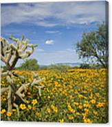 Mexican Golden Poppy Flowers And Cactus Canvas Print