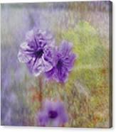Mexican Petunia Canvas Print
