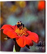 Mexican Sunflower Open House Party Time Canvas Print