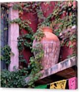 Mexico, San Miguel De Allende, Ivy Canvas Print
