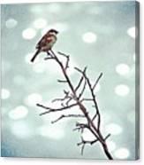 #mgmarts #bird #nature #life #bestpic Canvas Print