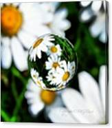 #mgmarts #daisy #flower #weed #summer Canvas Print