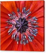 #mgmarts #nature #poppies #poppy Canvas Print