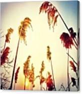 #mgmarts #sunset #bright #beautiful Canvas Print