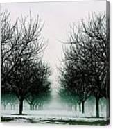 Michigan Cherry Trees In Winter Canvas Print