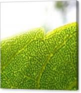 Micro Leaf Canvas Print
