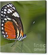 Micro Wings... Canvas Print