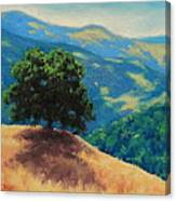 Mid Day On Golden Hills Canvas Print