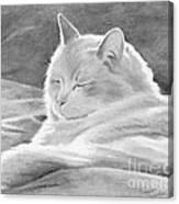 Mid-morning Meditation Canvas Print
