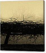 Middlethorpe Tree In Fog Antique Yellow Panorama Canvas Print