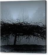 Middlethorpe Tree In Fog Blue Canvas Print