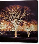 Midnight Glow Canvas Print