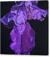 Midnight Iris Canvas Print