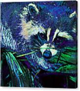 Midnight Racoon Canvas Print