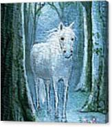 Midsummer Dream Canvas Print