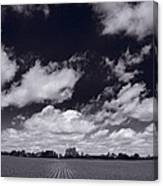 Midwest Corn Field Bw Canvas Print