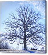 Mighty Oak In Winter Canvas Print