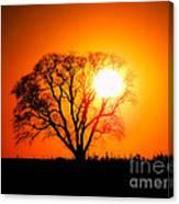 Mighty Oak Sunset Canvas Print