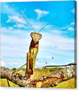 Mighty Super Mantis Canvas Print