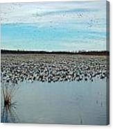 Migrating Geese Canvas Print