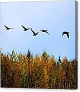 Migratory Flight Canvas Print