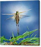 Migratory Locust Flying Canvas Print