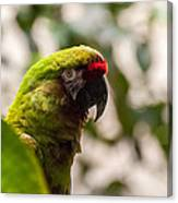 Military Macaw Canvas Print