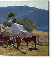 Milking Time. Araluen Valley Canvas Print